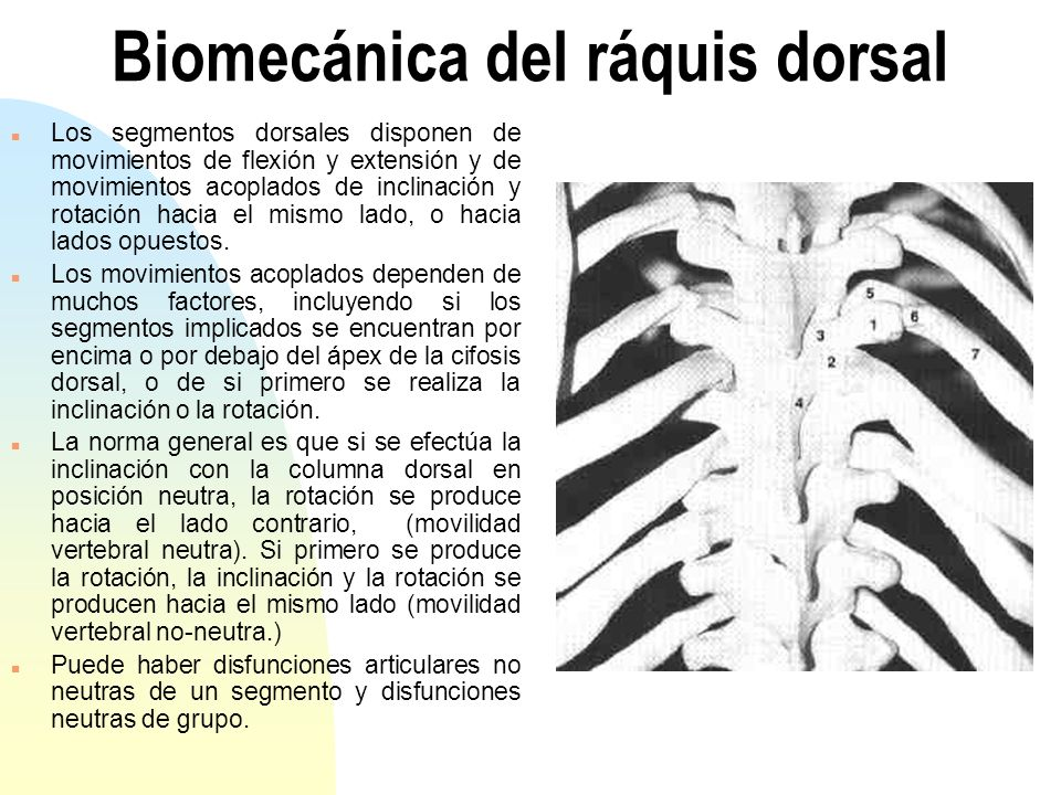 Biomecánica del ráquis dorsal