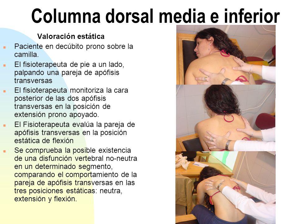 Columna dorsal media e inferior