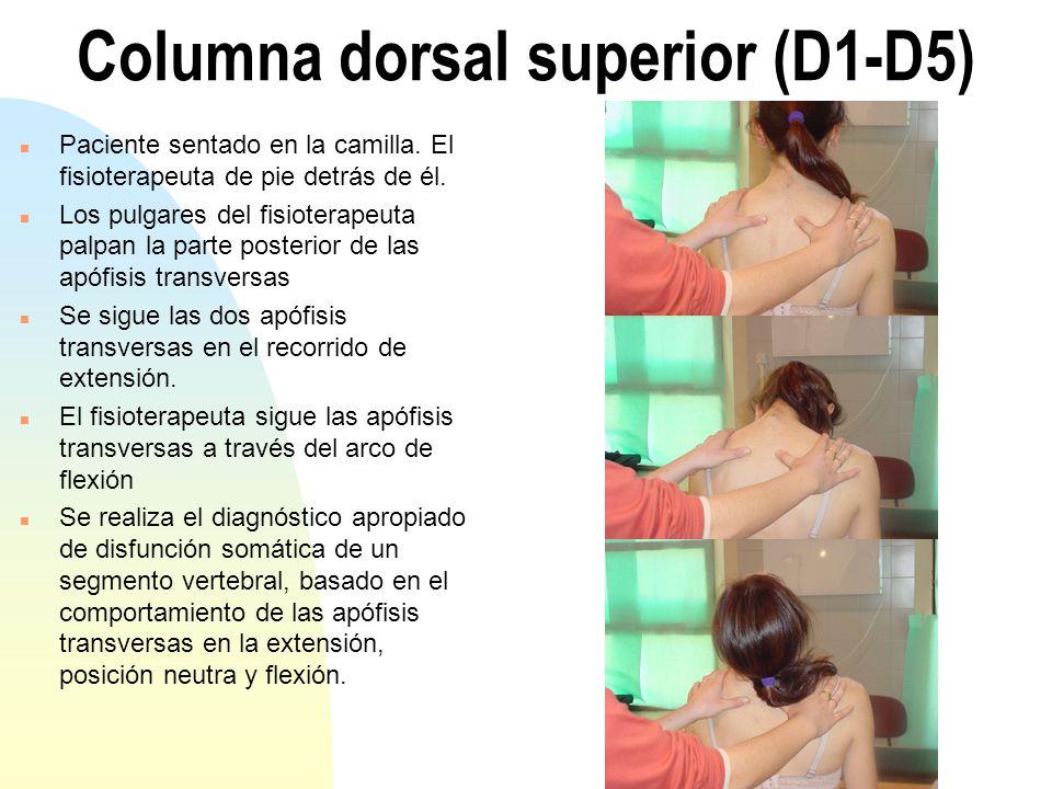 Columna dorsal superior (D1-D5)