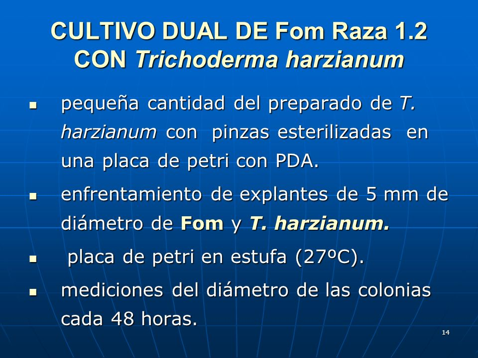 CULTIVO DUAL DE Fom Raza 1.2 CON Trichoderma harzianum