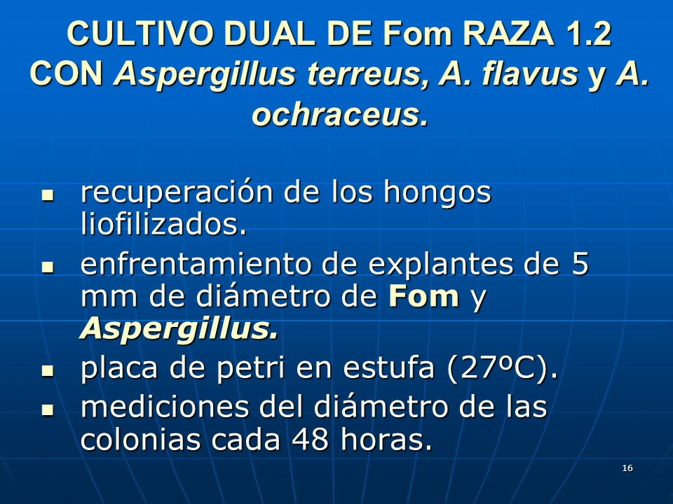 CULTIVO DUAL DE Fom RAZA 1. 2 CON Aspergillus terreus, A. flavus y A