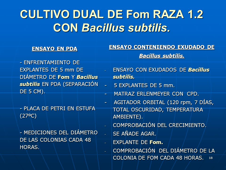 CULTIVO DUAL DE Fom RAZA 1.2 CON Bacillus subtilis.