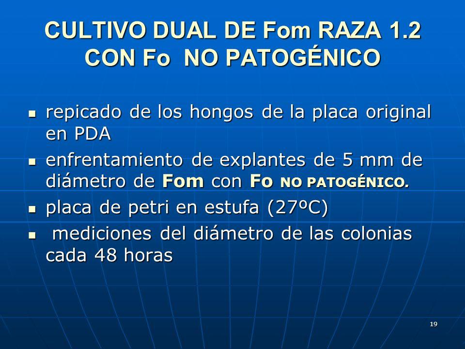 CULTIVO DUAL DE Fom RAZA 1.2 CON Fo NO PATOGÉNICO