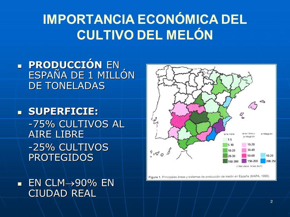 IMPORTANCIA ECONÓMICA DEL CULTIVO DEL MELÓN