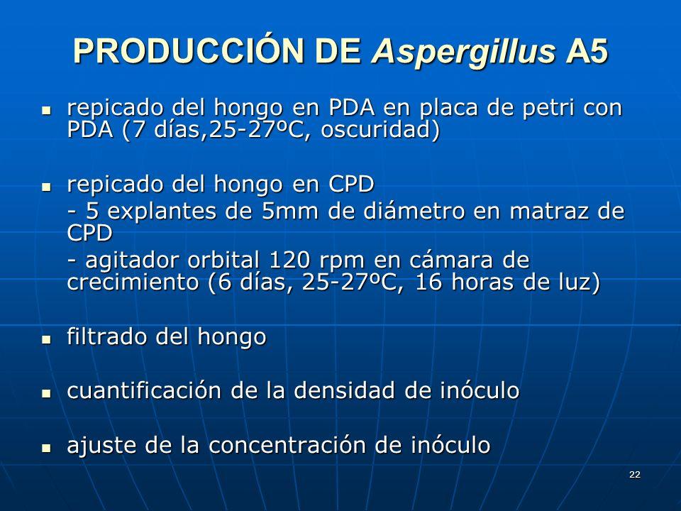 PRODUCCIÓN DE Aspergillus A5