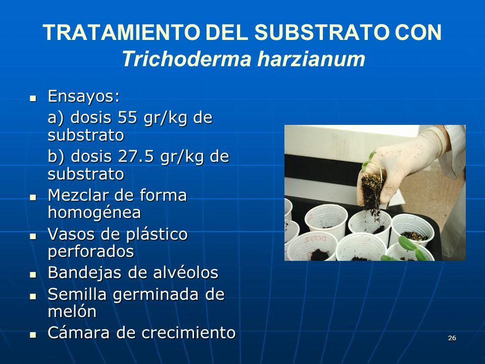 TRATAMIENTO DEL SUBSTRATO CON Trichoderma harzianum