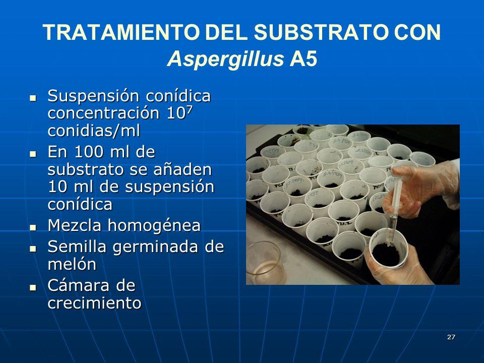 TRATAMIENTO DEL SUBSTRATO CON Aspergillus A5