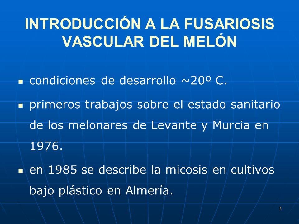 INTRODUCCIÓN A LA FUSARIOSIS VASCULAR DEL MELÓN