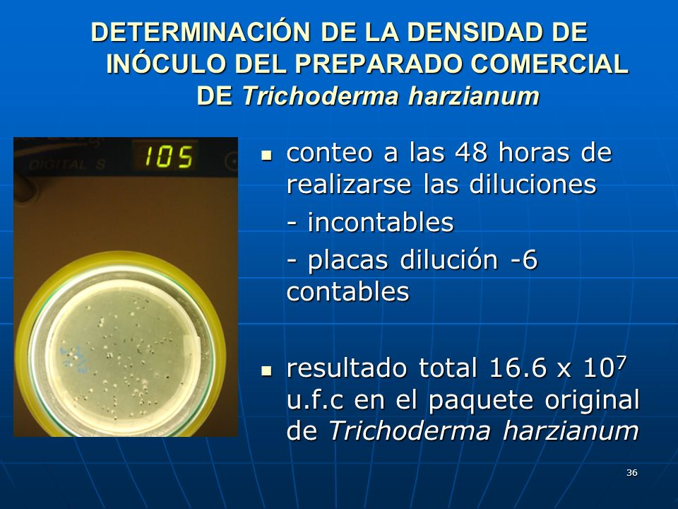 DETERMINACIÓN DE LA DENSIDAD DE INÓCULO DEL PREPARADO COMERCIAL DE Trichoderma harzianum