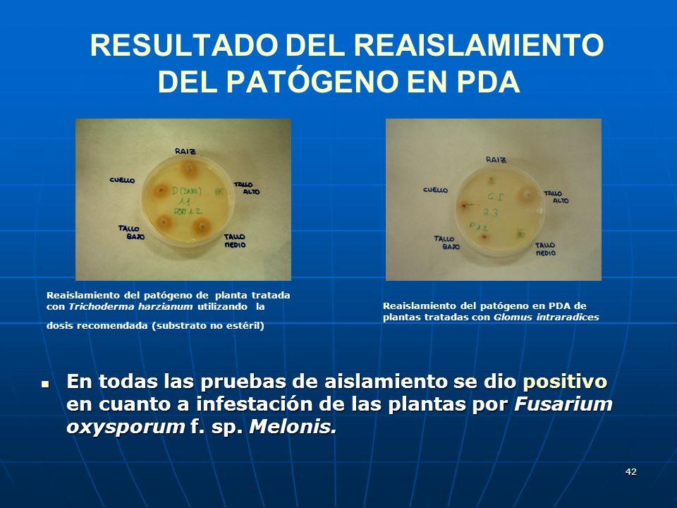 RESULTADO DEL REAISLAMIENTO DEL PATÓGENO EN PDA
