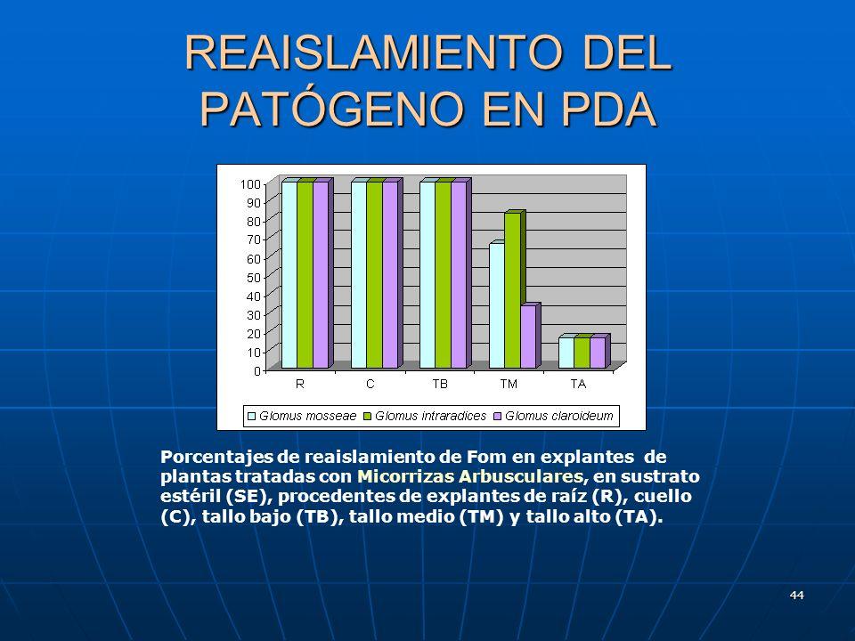 REAISLAMIENTO DEL PATÓGENO EN PDA