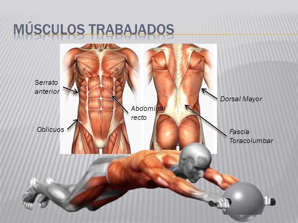 Músculos trabajados Serrato anterior Dorsal Mayor Abdominal recto