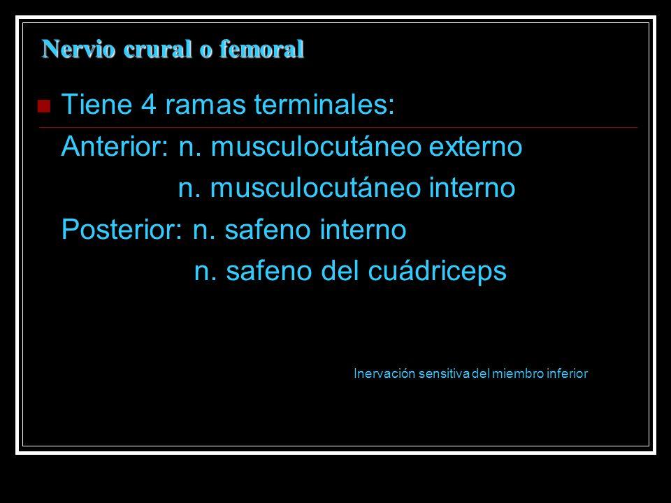 Nervio crural o femoral