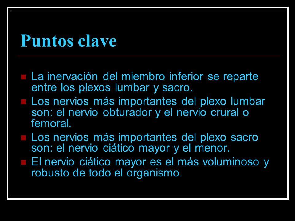 Puntos clave La inervación del miembro inferior se reparte entre los plexos lumbar y sacro.