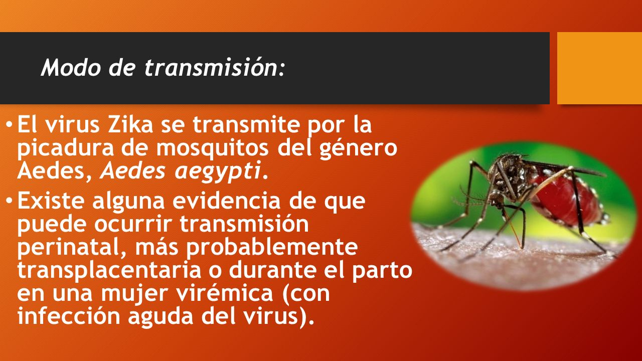 Modo de transmisión: El virus Zika se transmite por la picadura de mosquitos del género Aedes, Aedes aegypti.