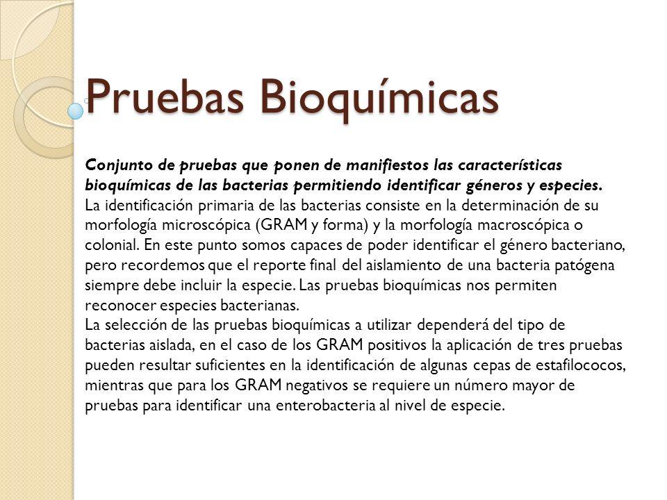 Pruebas Bioquímicas