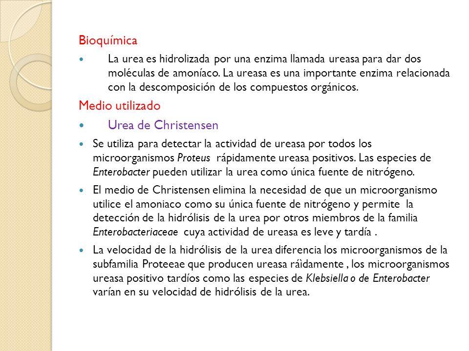Bioquímica Medio utilizado Urea de Christensen