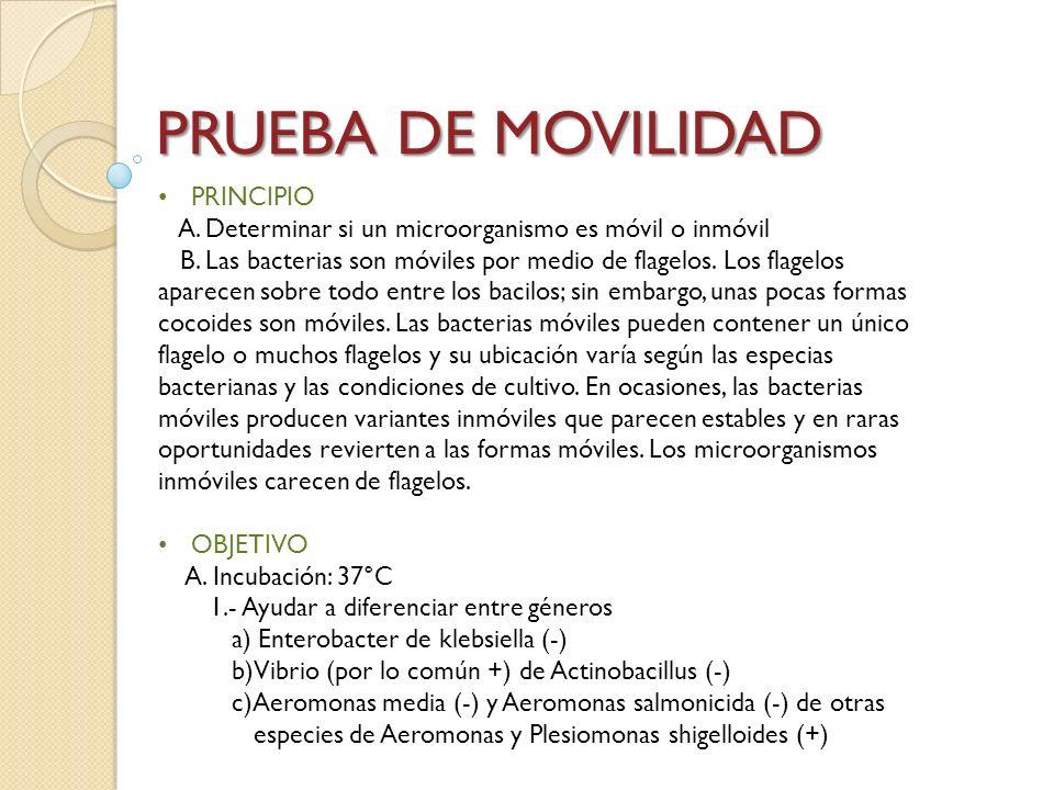 PRUEBA DE MOVILIDAD PRINCIPIO