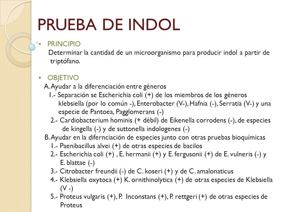 PRUEBA DE INDOL PRINCIPIO