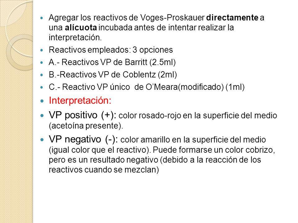 Agregar los reactivos de Voges-Proskauer directamente a una alícuota incubada antes de intentar realizar la interpretación.