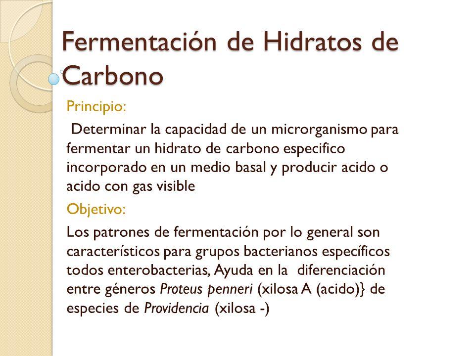 Fermentación de Hidratos de Carbono
