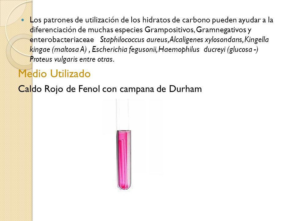 Medio Utilizado Caldo Rojo de Fenol con campana de Durham