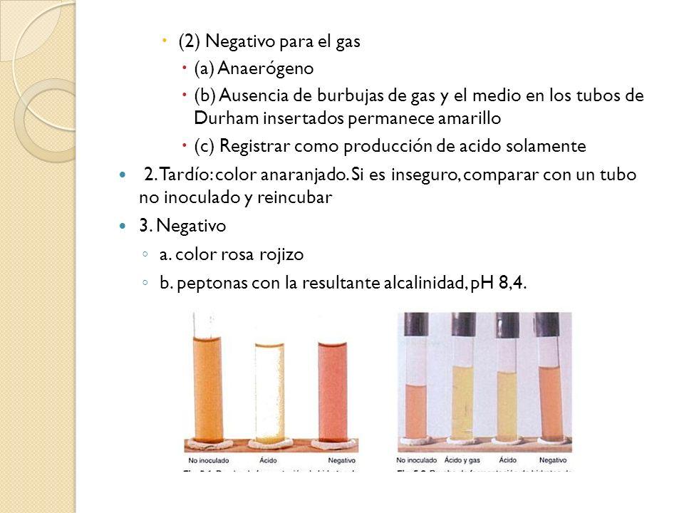 (2) Negativo para el gas (a) Anaerógeno. (b) Ausencia de burbujas de gas y el medio en los tubos de Durham insertados permanece amarillo.