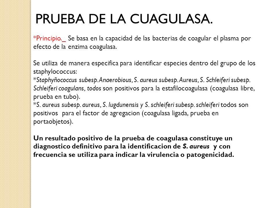 PRUEBA DE LA CUAGULASA. *Principio._ Se basa en la capacidad de las bacterias de coagular el plasma por efecto de la enzima coagulasa.