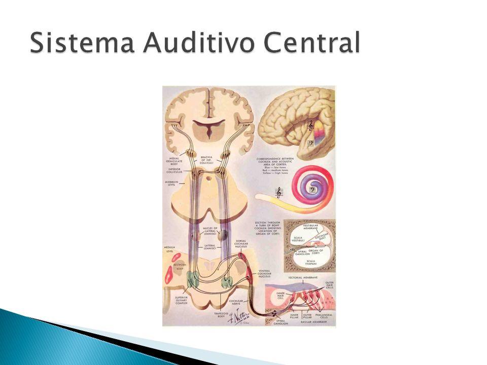 Sistema Auditivo Central