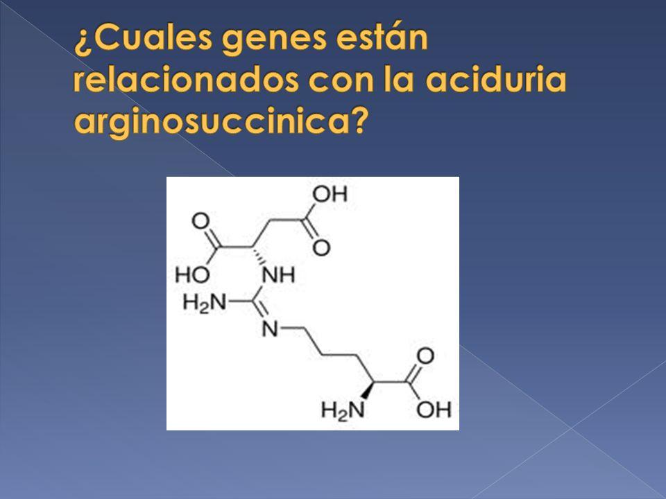 ¿Cuales genes están relacionados con la aciduria arginosuccinica