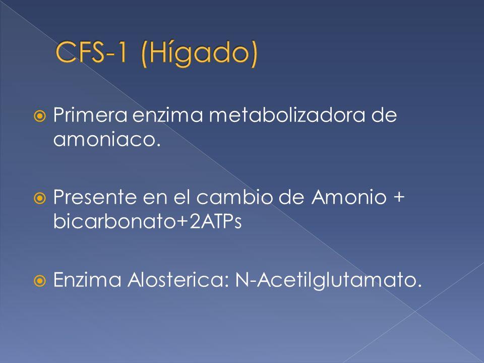 CFS-1 (Hígado) Primera enzima metabolizadora de amoniaco.