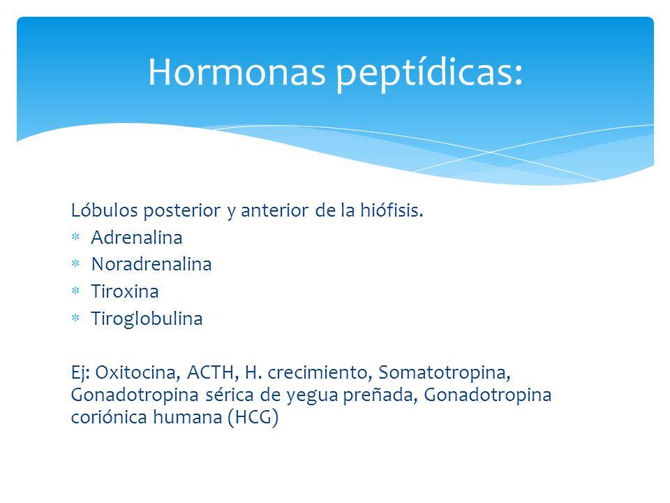Hormonas peptídicas: Lóbulos posterior y anterior de la hiófisis.