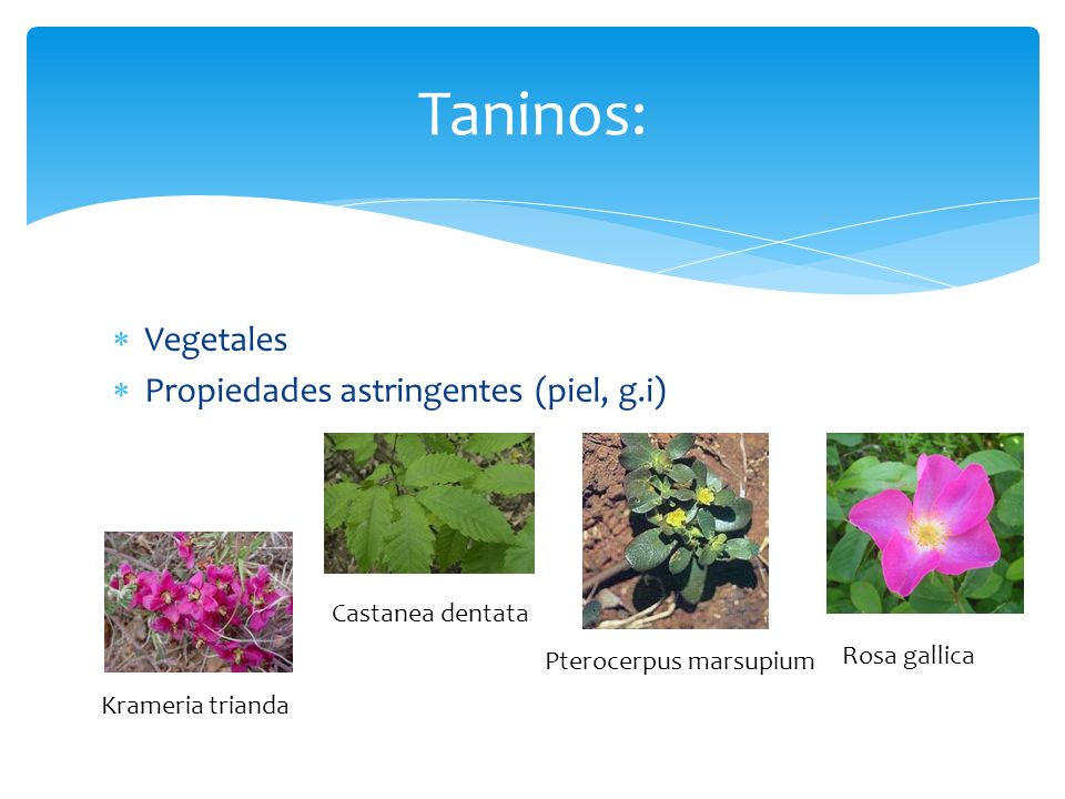 Taninos: Vegetales Propiedades astringentes (piel, g.i)