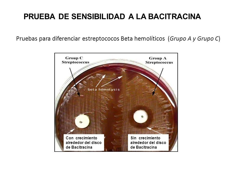 PRUEBA DE SENSIBILIDAD A LA BACITRACINA