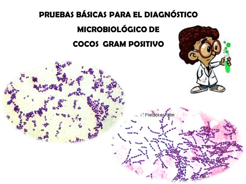 PRUEBAS BÁSICAS PARA EL DIAGNÓSTICO MICROBIOLÓGICO DE