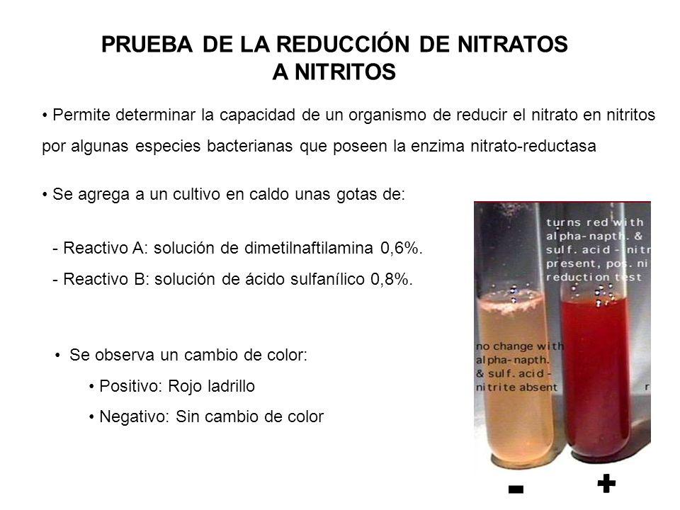 PRUEBA DE LA REDUCCIÓN DE NITRATOS
