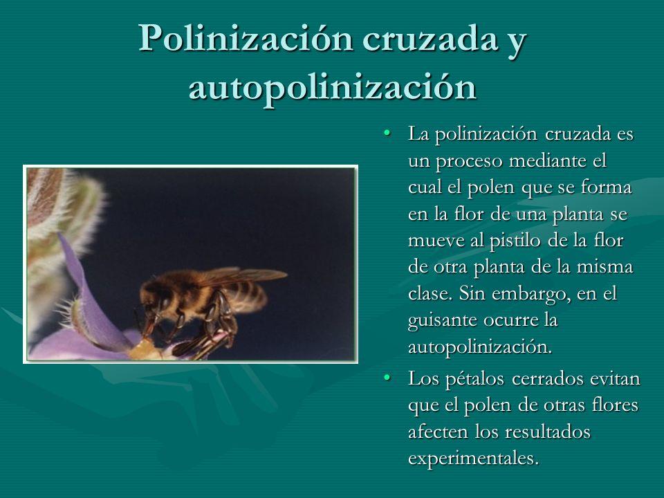 Polinización cruzada y autopolinización