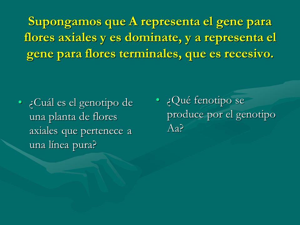 Supongamos que A representa el gene para flores axiales y es dominate, y a representa el gene para flores terminales, que es recesivo.