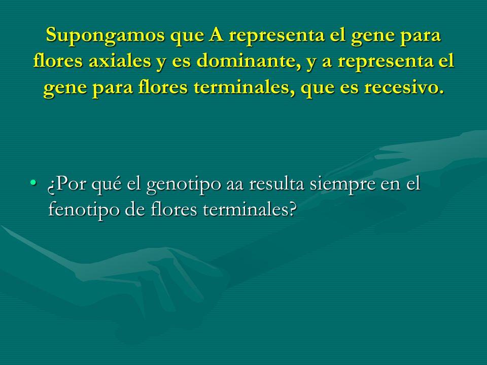Supongamos que A representa el gene para flores axiales y es dominante, y a representa el gene para flores terminales, que es recesivo.