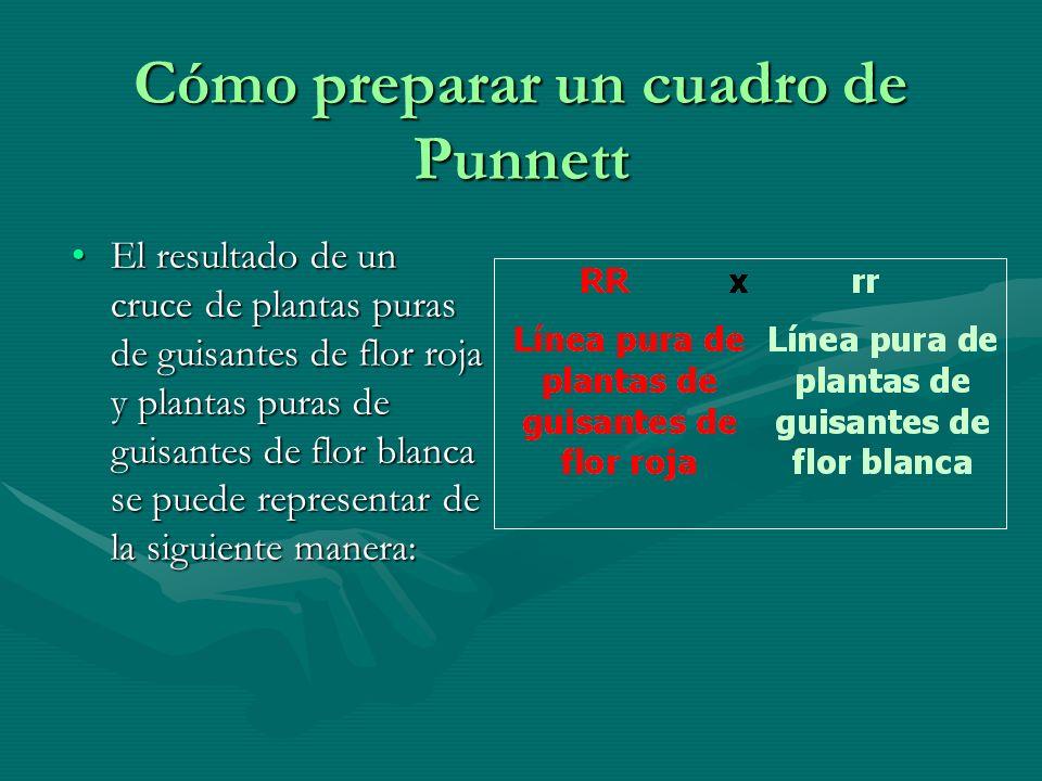 Cómo preparar un cuadro de Punnett