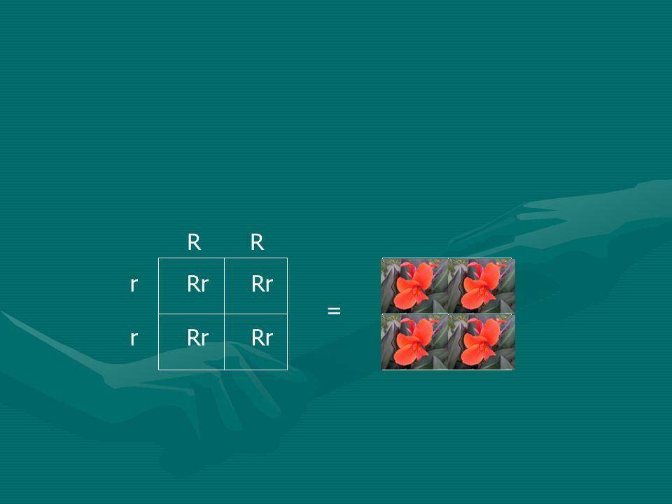 R R r Rr Rr =