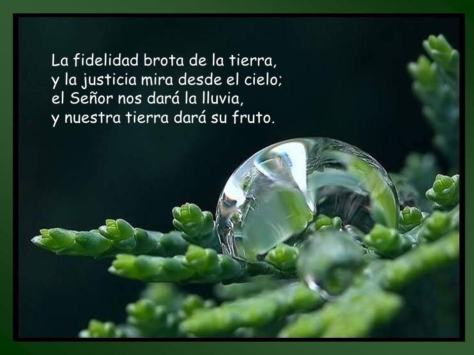 La fidelidad brota de la tierra,