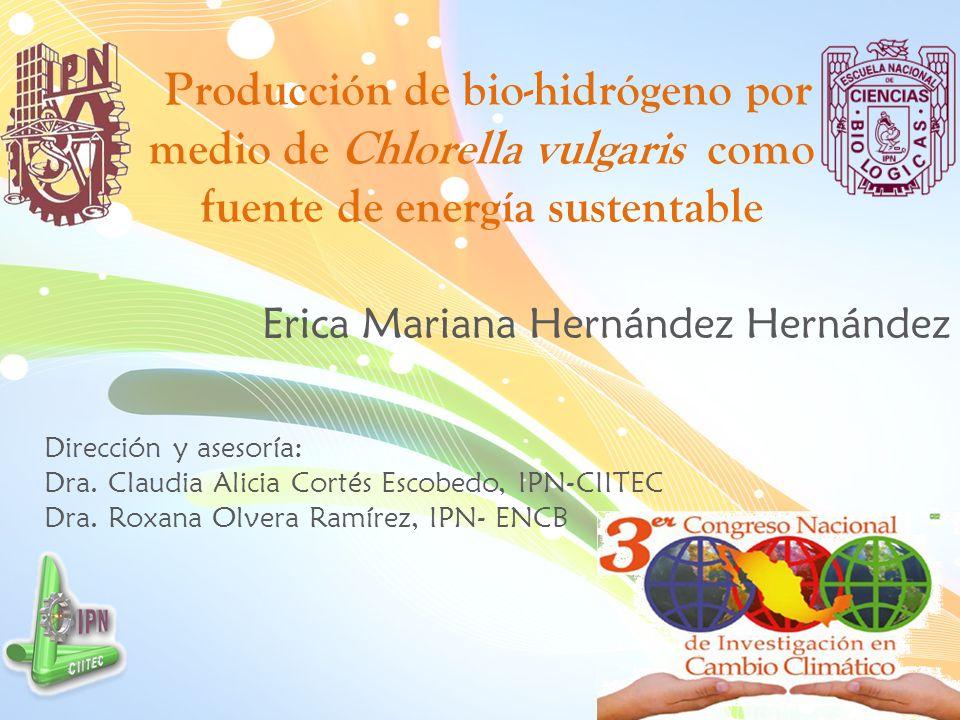 Erica Mariana Hernández Hernández