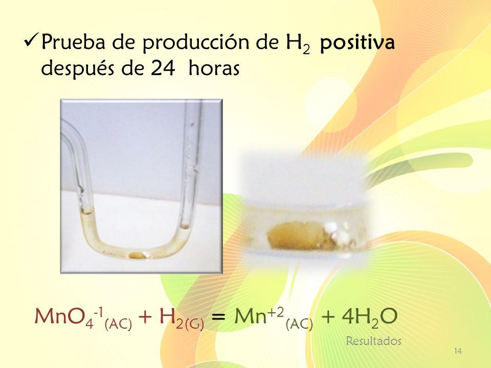 Prueba de producción de H2 positiva después de 24 horas