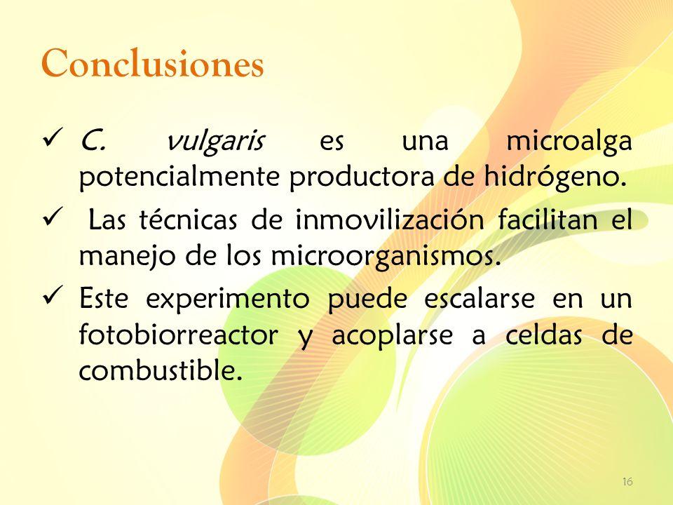 Conclusiones C. vulgaris es una microalga potencialmente productora de hidrógeno.