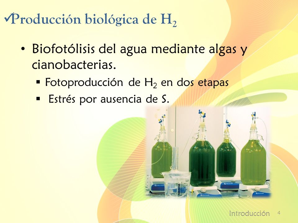 Producción biológica de H2