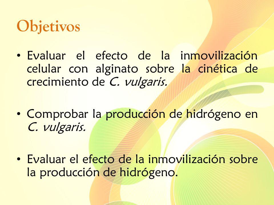 Objetivos Evaluar el efecto de la inmovilización celular con alginato sobre la cinética de crecimiento de C. vulgaris.