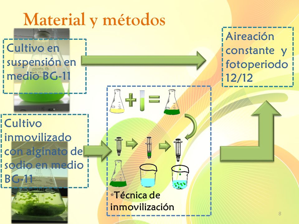 Material y métodos Aireación constante y fotoperiodo12/12
