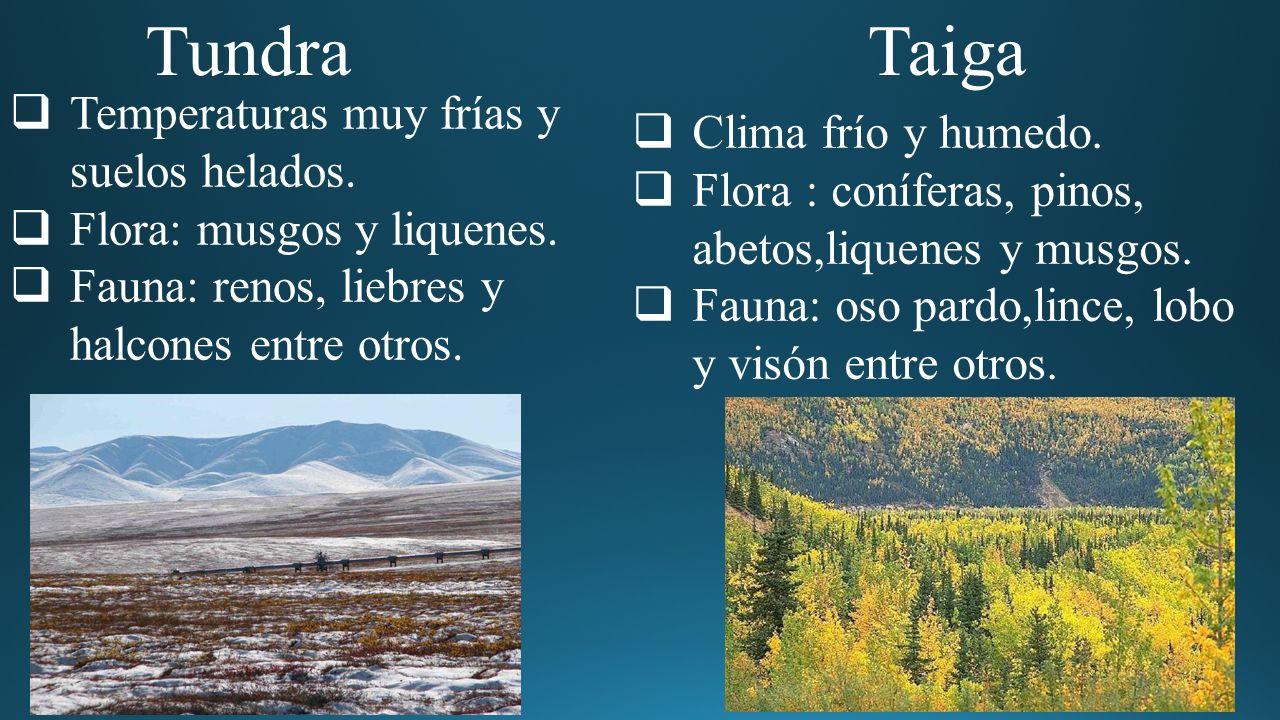 8 ecosistemas terrestres - ppt video online descargar