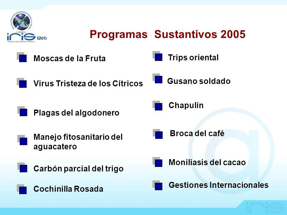 Programas Sustantivos 2005